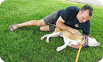 Boxer/American Staffordshire Terrier Mix Dog for adoption in Sacramento, California - Max read DNA test