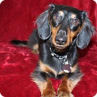 Adopt A Pet :: Hans So-Low - Louisville, CO