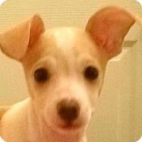Adopt A Pet :: Becky#5F - Orlando, FL