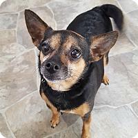 Adopt A Pet :: Abby - Fennville, MI