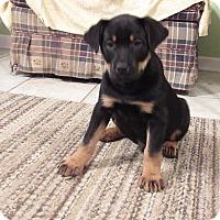 Adopt A Pet :: Luger - Bedford, VA
