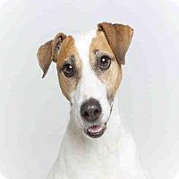 Adopt A Pet :: NITRO - Murray, UT