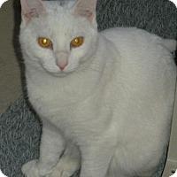 Adopt A Pet :: Pippen - Washington, VA