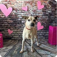 Adopt A Pet :: Tim (The McGraws) - Charlotte, NC