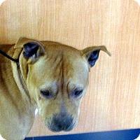 Adopt A Pet :: Sterling - Ludington, MI