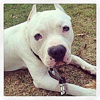 Adopt A Pet :: Casper - Santa Monica, CA
