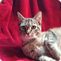 Adopt A Pet :: Tifi - Simpsonville, SC