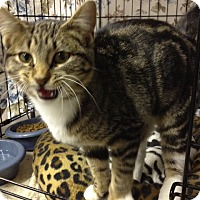 Adopt A Pet :: Tamryn - Byron Center, MI