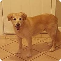 Adopt A Pet :: Judith - New Canaan, CT