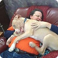 Adopt A Pet :: Thai - Phoenix, AZ