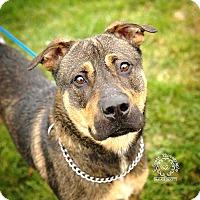 Adopt A Pet :: Mason - ADOPTED! - Zanesville, OH