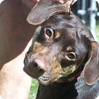 Adopt A Pet :: JESSI - Odessa, FL