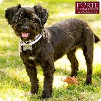 Adopt A Pet :: Princess - Marina del Rey, CA