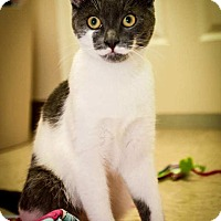Adopt A Pet :: Loki - Trevose, PA
