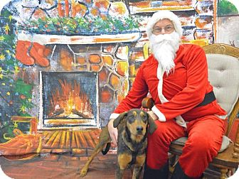Doberman Pinscher/Hound (Unknown Type) Mix Dog for adoption in Coeburn, Virginia - SARAH