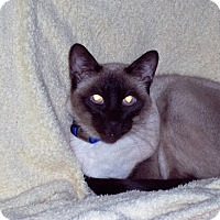 Adopt A Pet :: Koko - Laguna Woods, CA