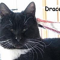 Adopt A Pet :: Dracena - Polson, MT