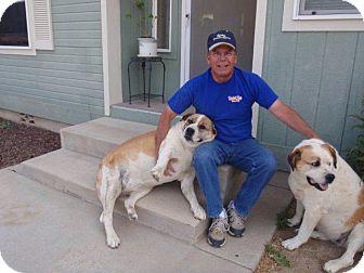 St. Bernard Mix Dog for adoption in Temecula, California - Lola and Roxy