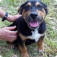 Adopt A Pet :: BECKETT - Glastonbury, CT