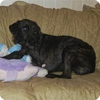 Adopt A Pet :: Sweetie - Antioch, IL