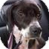 Adopt A Pet :: Oreo - Jacksonville, FL