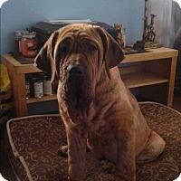 Adopt A Pet :: Berlin - Northumberland, ON