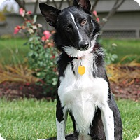 Adopt A Pet :: Chloe - Midwest (WI, IL, MN), WI