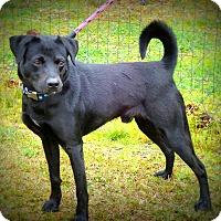 Adopt A Pet :: Midnight - Newport, NC