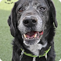 Adopt A Pet :: Shadow - Youngwood, PA