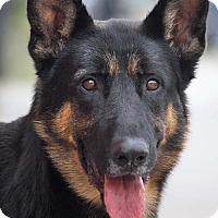 Adopt A Pet :: Ritter von Rikard - Los Angeles, CA