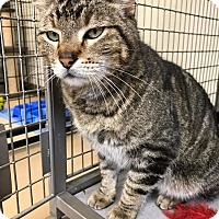 Adopt A Pet :: Mouzer - Maryville, MO