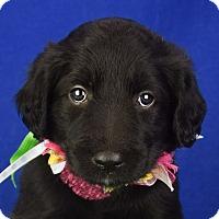 Adopt A Pet :: Anniston - Denver, CO