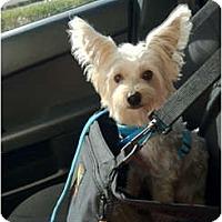Adopt A Pet :: Quincy - Hardy, VA