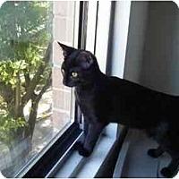 Adopt A Pet :: Minnie - Kensington, MD