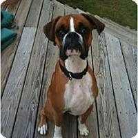 Adopt A Pet :: Charlie - Grafton, MA