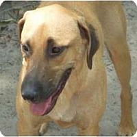 Adopt A Pet :: Tom - Pointblank, TX