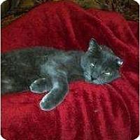 Adopt A Pet :: Vinnie - Clay, NY