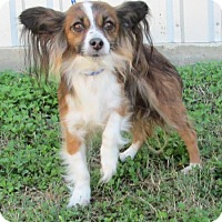 Adopt A Pet :: Willowbee - Lockhart, TX