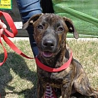 Adopt A Pet :: TROOPER - Loganville, GA