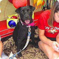Adopt A Pet :: Noelle - Scottsdale, AZ