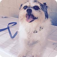 Adopt A Pet :: Spike - Van Nuys, CA