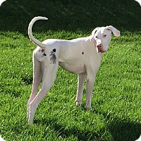 Adopt A Pet :: Marigny - St. Louis, MO