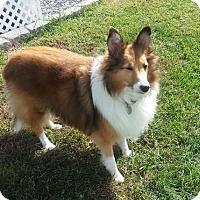 Adopt A Pet :: Charlie - Abingdon, MD