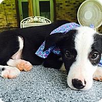 Adopt A Pet :: Bubba - Wharton, TX