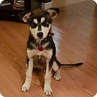 Adopt A Pet :: BAUER - Winnipeg, MB