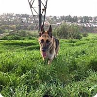 Adopt A Pet :: Baron - San Diego, CA