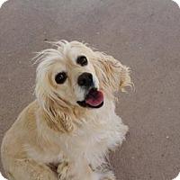 Adopt A Pet :: Delilah - Golden Valley, AZ