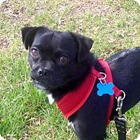 Adopt A Pet :: Pepe - Charlotte, NC