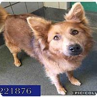 Adopt A Pet :: FLUFFERS - San Antonio, TX