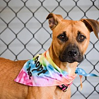 Mixed Breed (Medium) Mix Dog for adoption in Meridian, Idaho - Gracie